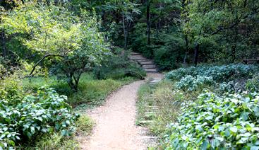 007-산림욕길02.png