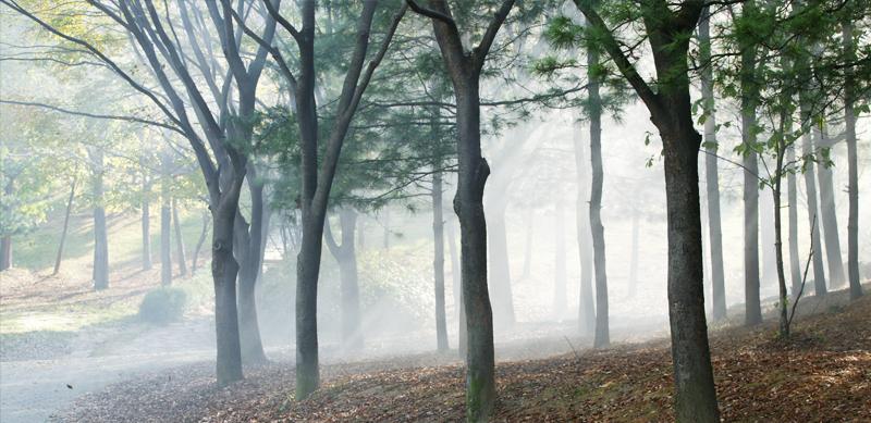 003-산림욕장 소개.png
